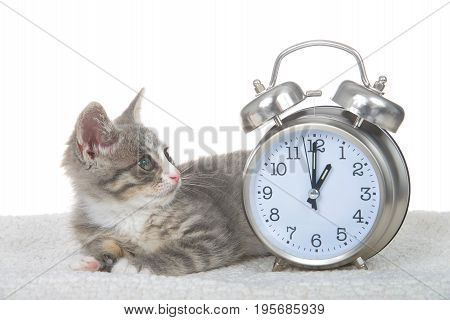 Gray and white kitten laying on sheepskin blanket next to a clock set for 1 o'clock. One AM daylight savings begins and ends. Spring forward Fall back. Kitty looking at the clock.