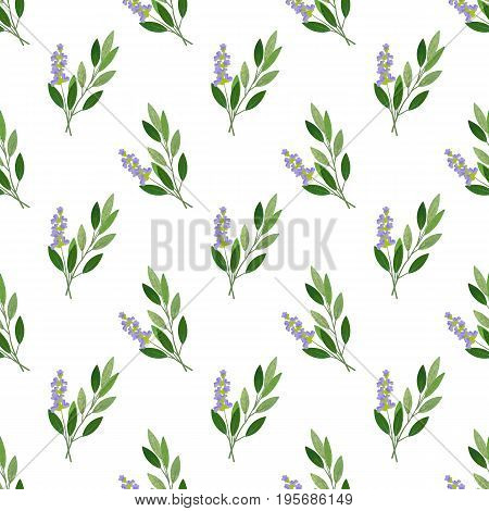 Seamless Background Image Colorful Watercolor Texture Vegetable Food Ingredient Sage
