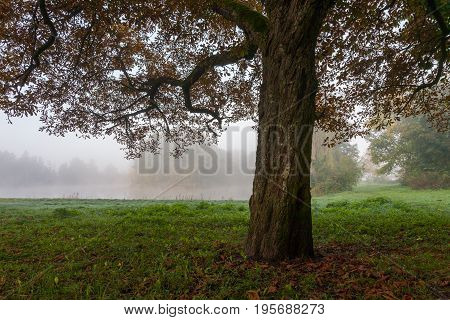 Landscape park int misty morning with old tree trunk in foreground, Palace Park, Bialowieza, Poland