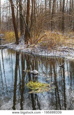 Winter early morning by forest river with fresh snow, Bialowieza Forest, Poland, Europe