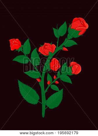 Branch bushy roses dotted with small and big buds of red roses. For cards, greetings and decorations.