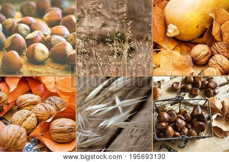Photo collage six square images autumn fall hazelnuts walnuts dry colorful leaves chestnuts in wicker basket pumpkin meadow plants thanksgiving cozy
