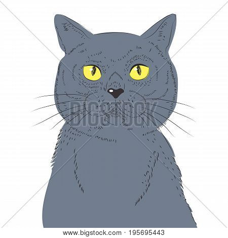 British Shorthair Cat Hand Draw Vector Sketch Illustrations. Animal Illustration Furry Art Hand Drawn Cat Breed.