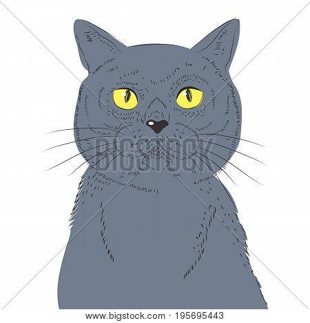 British Shorthair Cat Hand Draw Vector Sketch Illustrations. Animal Illustration Furry Art Hand Drawn Cat Breed.