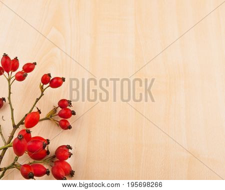 Wild rose with hips on wooden base - autumn decorative background