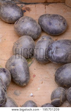 Organic blue Inca heirloom potatoes in bin at farmer's market