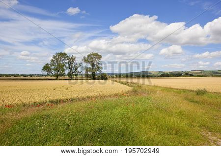 Ash Trees And Wheat