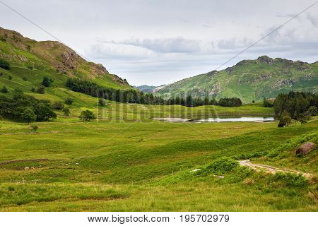 Green landscapes in Lake District National Park, England, stone wall, cows, mountains on the background, selective focus
