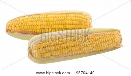 Sweet Corn On Cobs Kernels Or Grains Of Ripe Corn Isolated On White Background