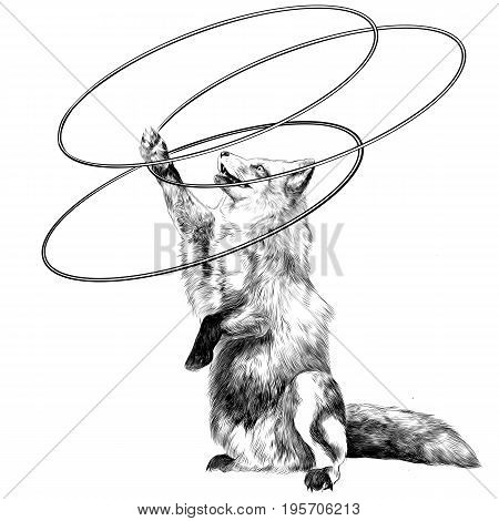 a Fox on its hind legs at the circus twists hoops sketch vector graphics black and white drawing