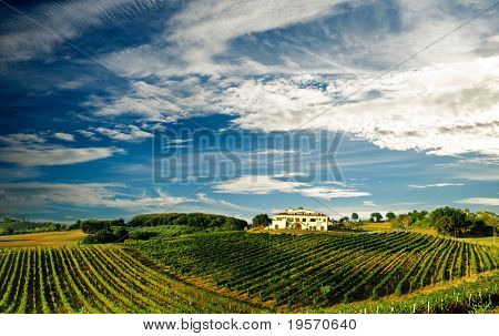 Beautiful vineyard panoramic in Italy...