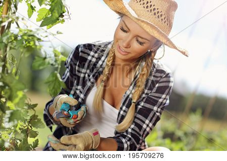 Adult woman using garden shears in vegetable garden