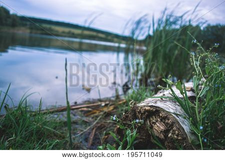Dry log in nature near pond with blurred background