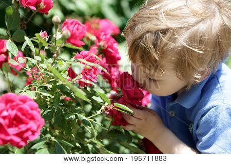 Boy smelling red rose in the park