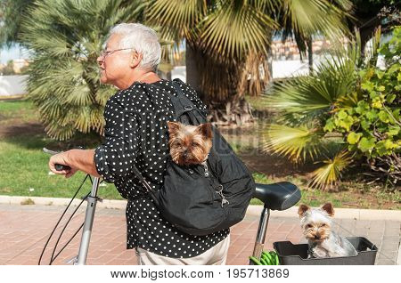 Women and dogs in the carrier on bike