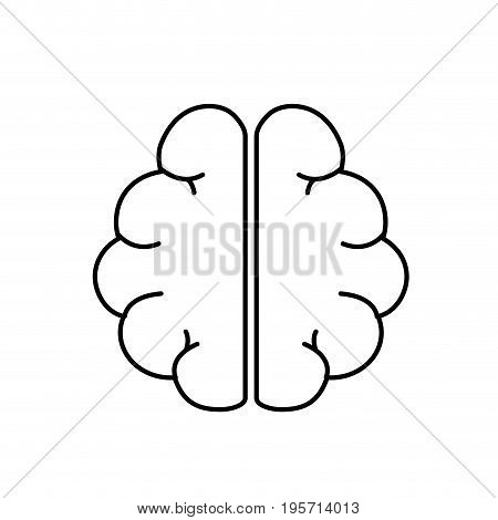 line anatomy brain to imagination and memory inspiration vector illustration