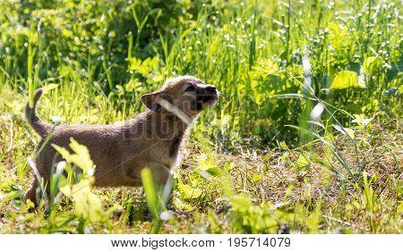 A little curious puppy among the green grass.