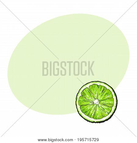 Top view round slice, half of ripe green lime, sketch style vector illustration with space for text. Hand drawn lime cut in half, round slice