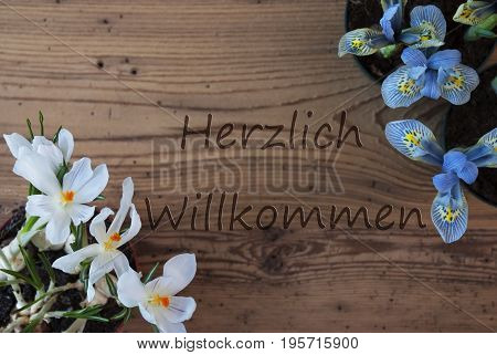 Wooden Background With German Text Herzlich Willkommen Means Welcome. Spring Flowers Like Grape Hyacinth And Crocus. Aged Or Vintage Style