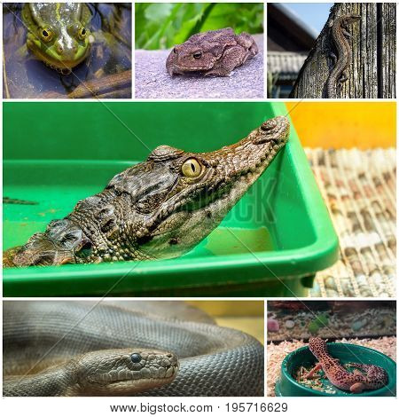 Collage of six different pictures of reptiles and amphibians.