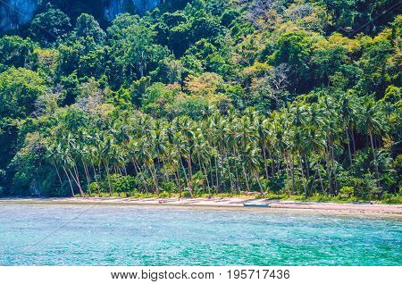 Palm trees on Cadlao Island, El -Nido, Palawan, Philippines