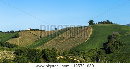 Young vineyard in Italy - wine grapes are coming