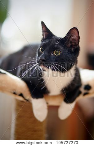 Cat of a black-and-white color with green eyes.