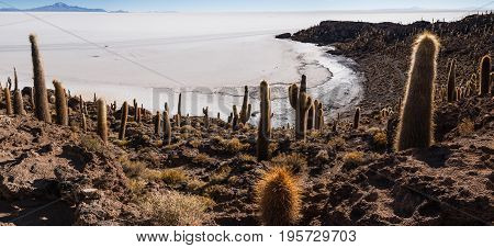 Incahuasi island (Cactus Island) located on Salar de Uyuni the world's largest salt flat area Altiplano Bolivia South America