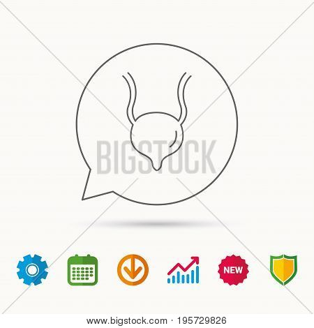 Urinary bladder icon. Human body organ sign. Urology health symbol. Calendar, Graph chart and Cogwheel signs. Download and Shield web icons. Vector