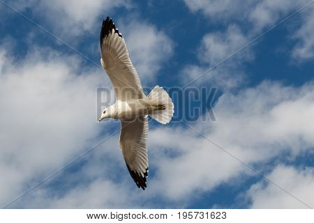 A white bird flying, freedom in the air