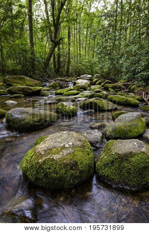 Moss Covered Rocks and Mountain Stream in Smoky Mountains