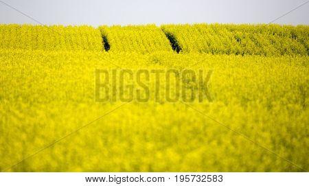 Saskatchewan Farmland In Summer