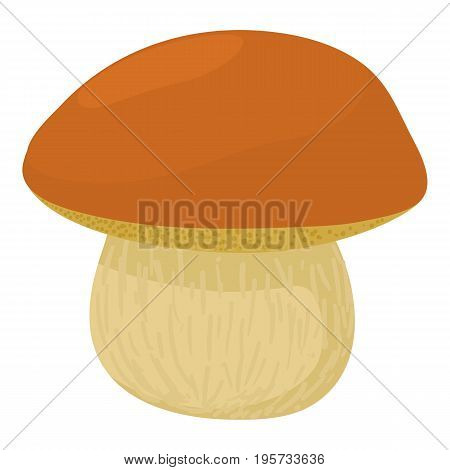Boletus edulis icon. Cartoon illustration of boletus edulis vector icon for web