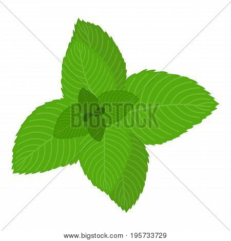 Mint icon. Cartoon illustration of mint vector icon for web