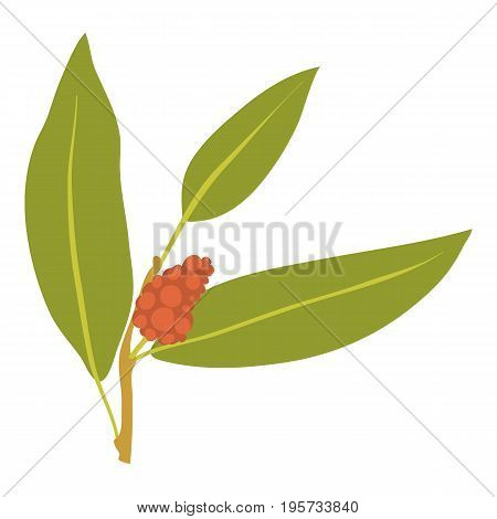 Juniper berry icon. Cartoon illustration of juniper berry vector icon for web