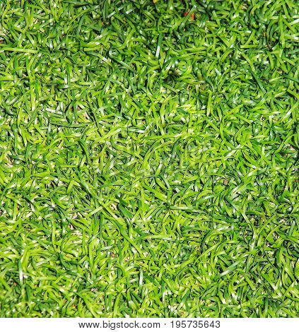 A Close up image of Artificial Grass