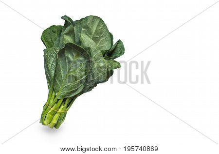 fresh chinese kale vegetable isolated on white background