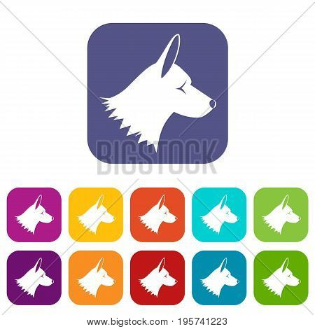Collie dog icons set vector illustration in flat style In colors red, blue, green and other