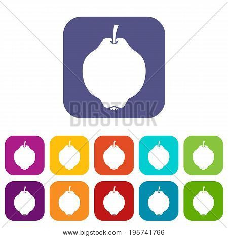 Quince fruit icons set vector illustration in flat style In colors red, blue, green and other