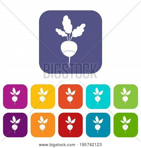 Fresh radish icons set vector illustration in flat style In colors red, blue, green and other