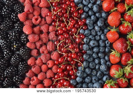 Different forest berries on a gray background