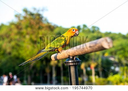 Parrot, lovely bird animal and pet at natural park