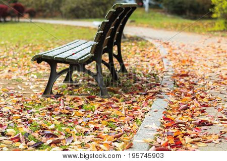 Japan autumn Wooden bench and beautiful autumn leaves in in soft focus and blur style Obuse park NaganoJapan.
