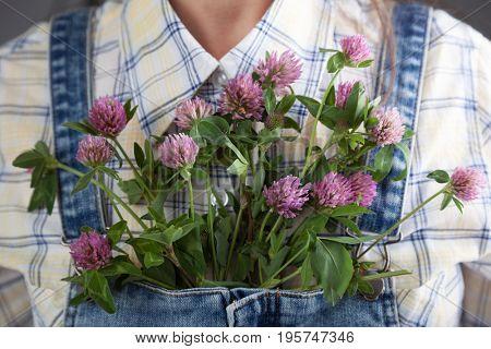 Flowering clover in the jeans girl's pocket in summer.