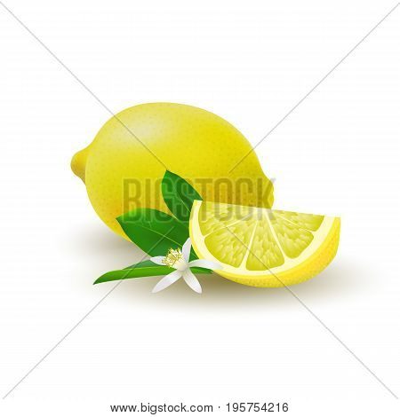 Isolated colored group of lemons slice and whole juicy fruit with green leaves white flower and shadow on white background. Realistic citrus