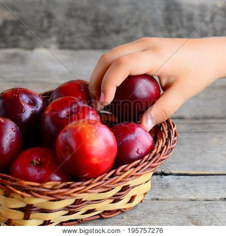 Child takes one plum from a basket. Fresh ripe plums in a wicker basket on an vintage wooden table. Healthy food for kids