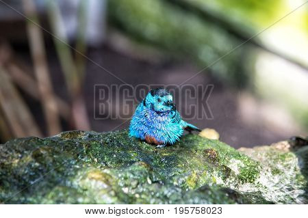 Bird small cute bird with blue feathers sitting on stone on sunny summer day on blurred natural background. Wildlife and nature. Ornithology
