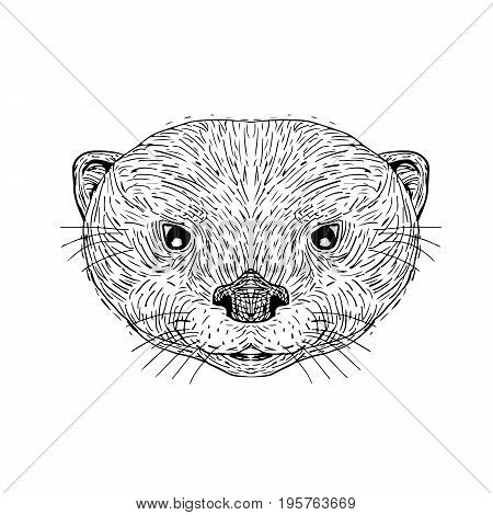 Illustration of an Asian Small-Clawed Otter Head done in hand Drawing sketch style on isolated background.