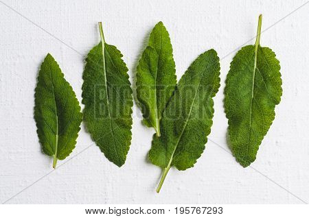 Sage Leaves On White Background. Flat Lay And Top View