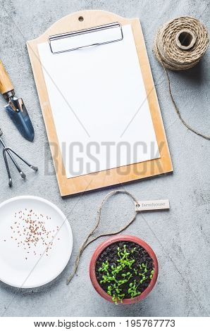Sprouts In A Pot, Seeds And Garden Tools On A Gray Concrete Background
